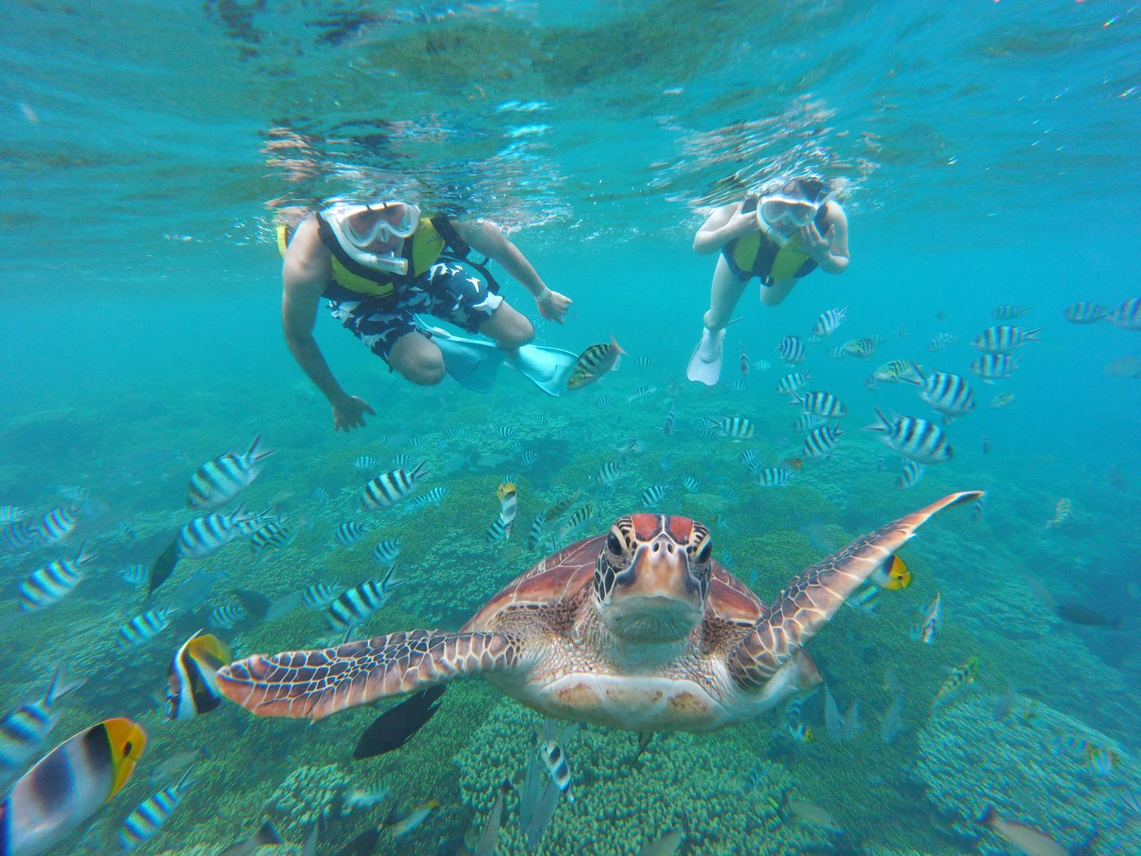 Snorkeling tour (Basic Course)