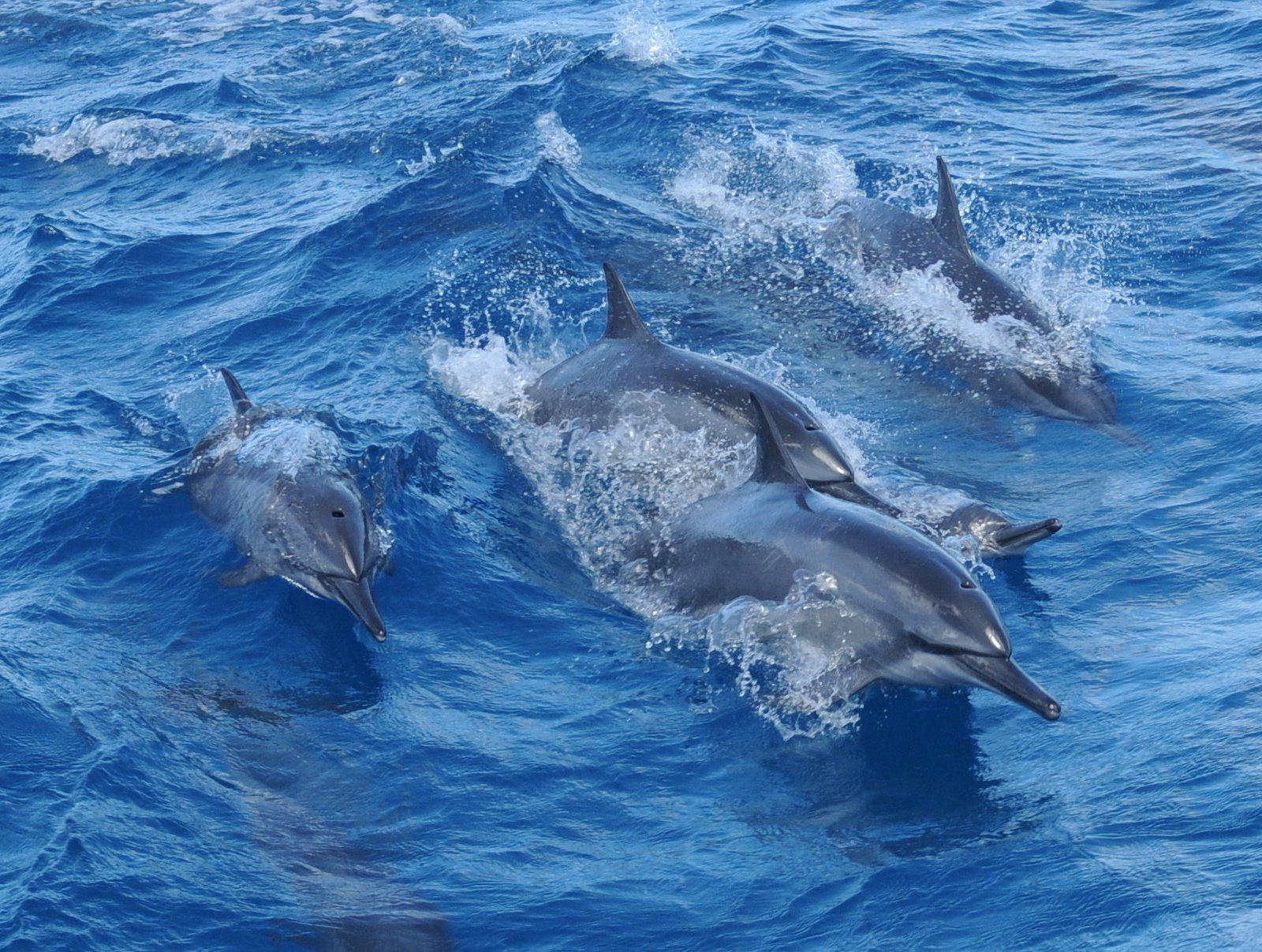 Fisheye Dolphin Watching with Observatory & Lunch Buffet