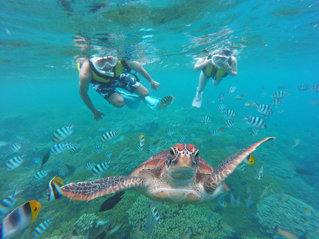 Snorkeling tour (Basic Course NTR)